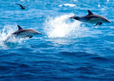 gallery-dolphin-1
