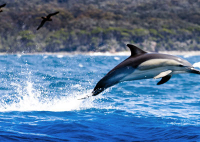 gallery-dolphin-3