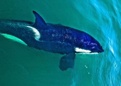 gallery-orca-3