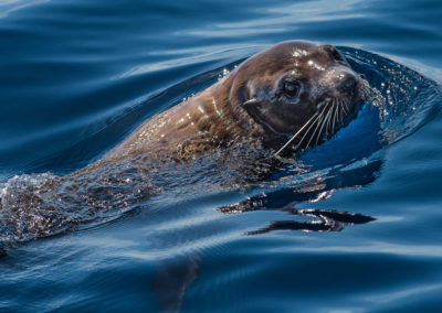 gallery-seal