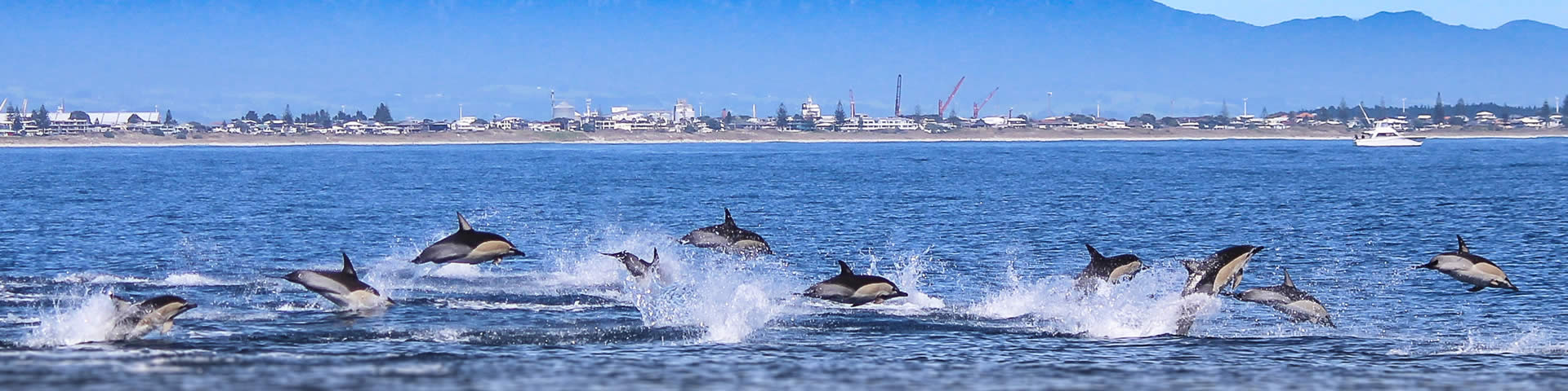 Your chance to watch dolphins in the wild