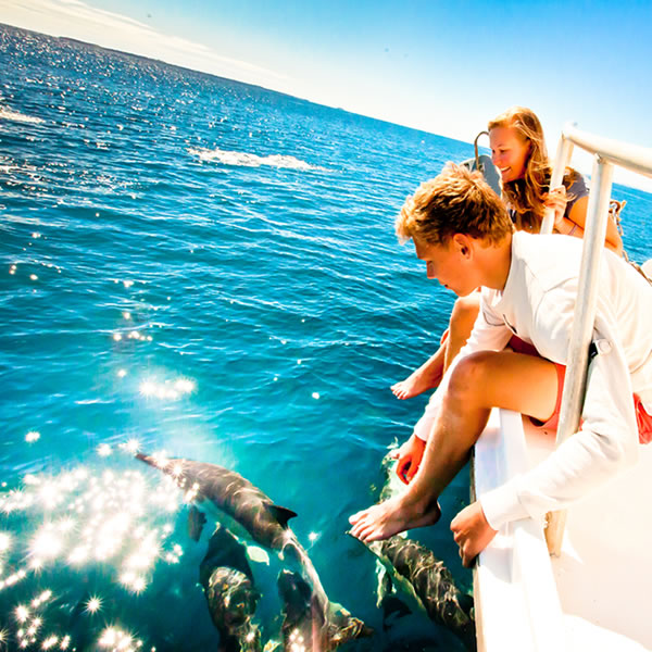 Dolphins and other majestic marine life awaits